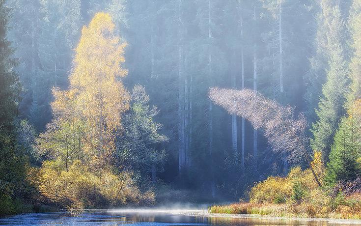 Ferienhaus Enztalblick in Enzklösterle im Nordschwarzwald - Bäume am herbstlichen Poppelsee im Gegenlicht