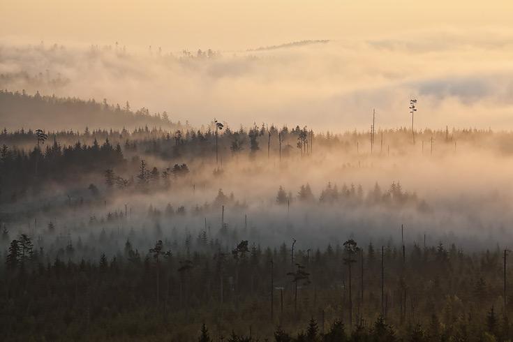 Ferienhaus Enztalblick in Enzklösterle im Nordschwarzwald - Nebelstimmung frühmorgens in Kaltenbronn