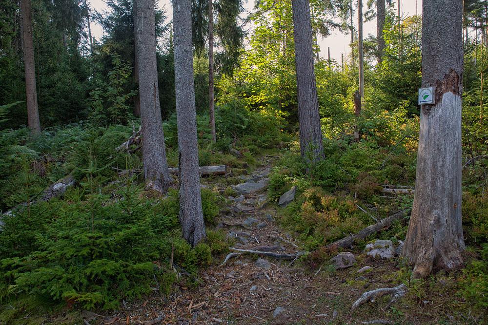 Ferienhaus Enztalblick in Enzklösterle im Nordschwarzwald - Wandervorschlag  Bärlochkar - Urwaldpfad durch den Bannwald