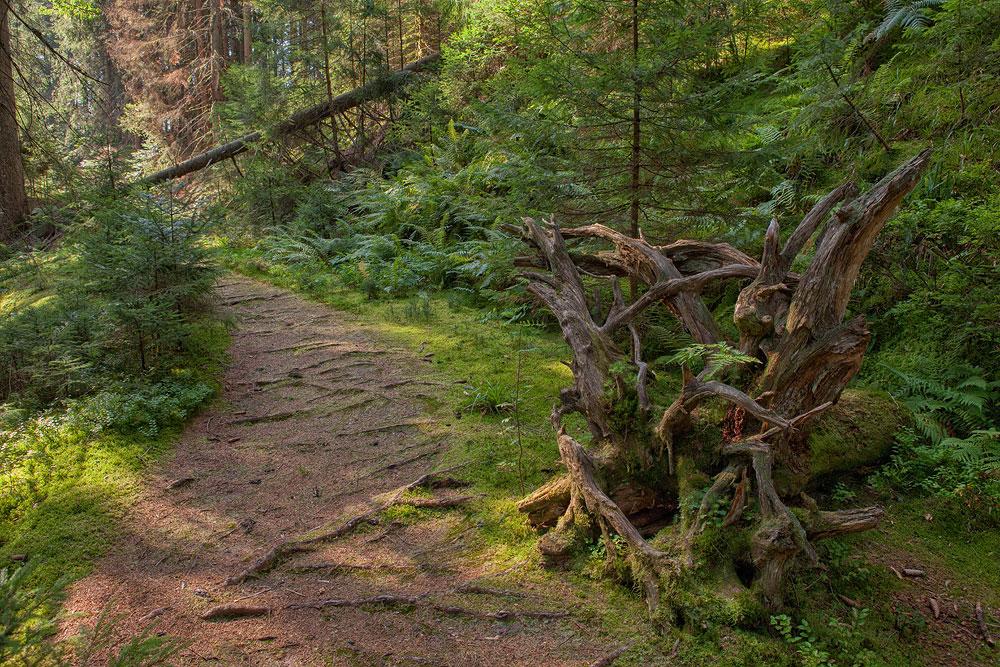 Ferienhaus Enztalblick in Enzklösterle im Nordschwarzwald - Wandervorschlag  Bärlochkar - Urwaldpfad durch den naturbelassenen Wald