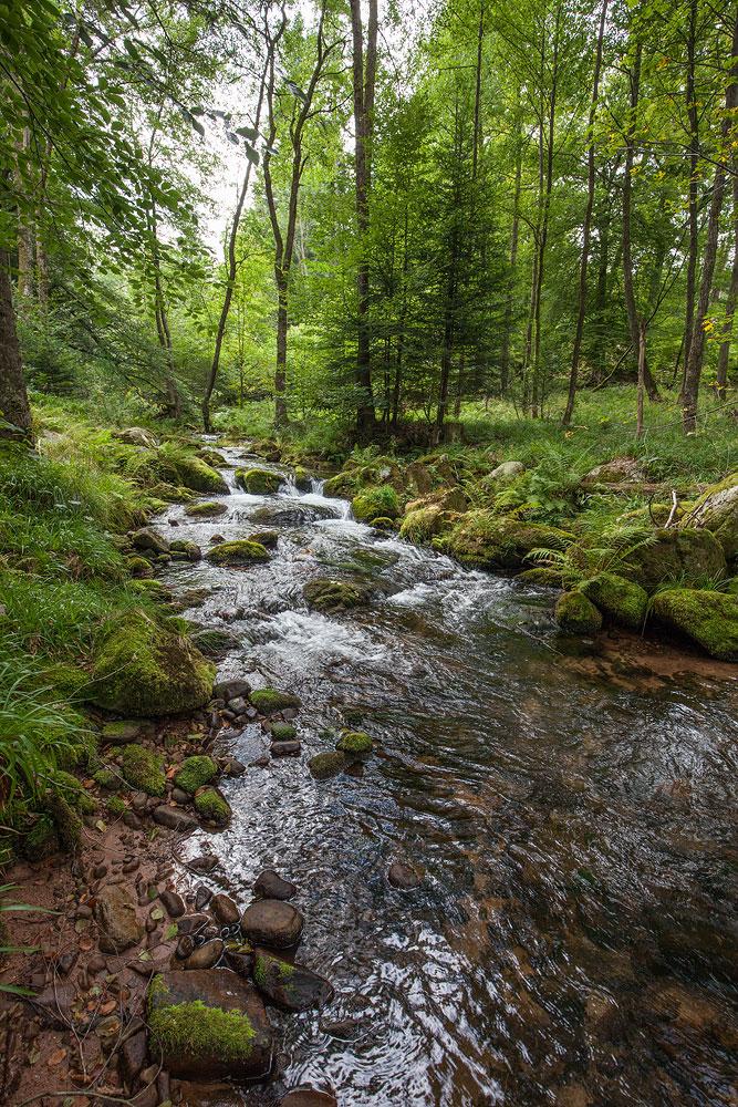 Ferienhaus Enztalblick in Enzklösterle im Nordschwarzwald - Wandervorschlag Eyachtal - Der steinige Lauf der Eyach
