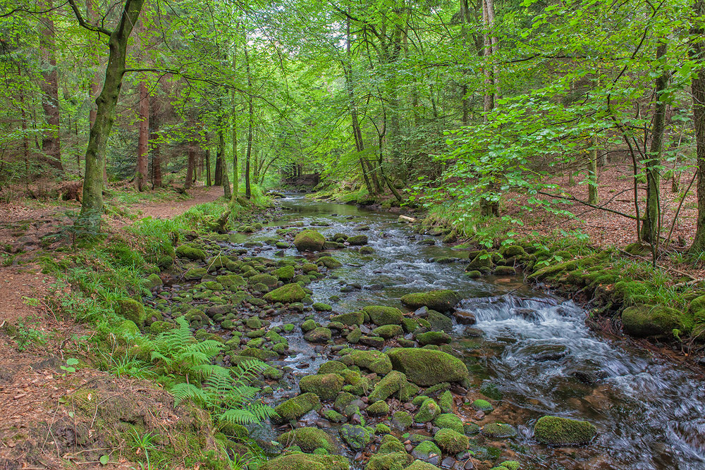 Ferienhaus Enztalblick in Enzklösterle im Nordschwarzwald - Wandervorschlag Eyachtal - Pfad entlang der Eyach