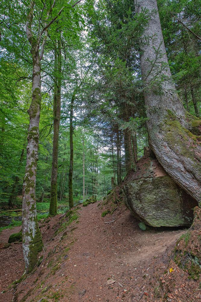 Ferienhaus Enztalblick in Enzklösterle im Nordschwarzwald - Wandervorschlag Eyachtal - Auf schmalem Pfad entlang der Eyach