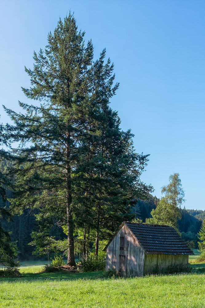 Ferienhaus Enztalblick in Enzklösterle im Nordschwarzwald - Wandervorschlag Fautsburg - Alte Scheune am Wegrand