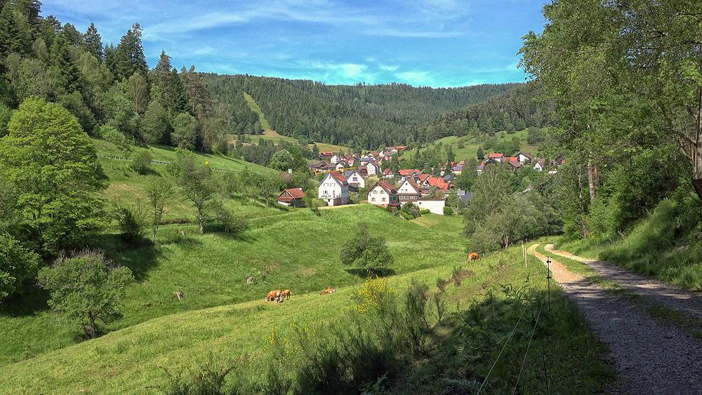 Ferienhaus Enztalblick in Enzklösterle im Nordschwarzwald - Wandervorschlag Heidelbeerweg in Enzklösterle - Abstieg vom Schöllkopf durch das Lappachtal