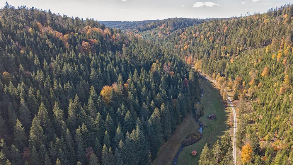 Ferienhaus Enztalblick in Enzklösterle im Nordschwarzwald - Wandervorschlag Kaltenbachsee - Kaltenbachtal im Herbst