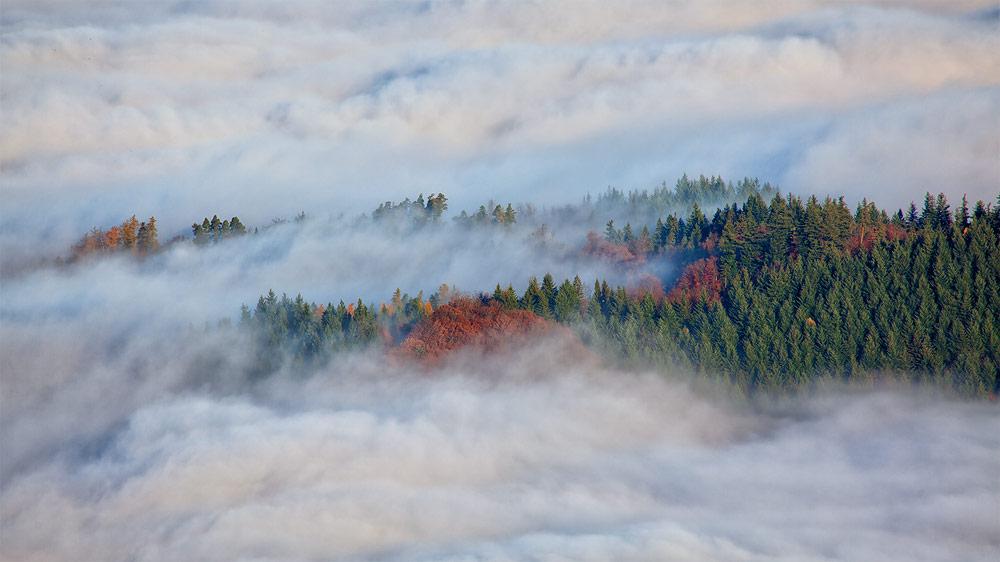 Ferienhaus Enztalblick in Enzklösterle im Nordschwarzwald - Wandervorschlag Hohlohsee - Nebelstimmung im Hohlohgebiet