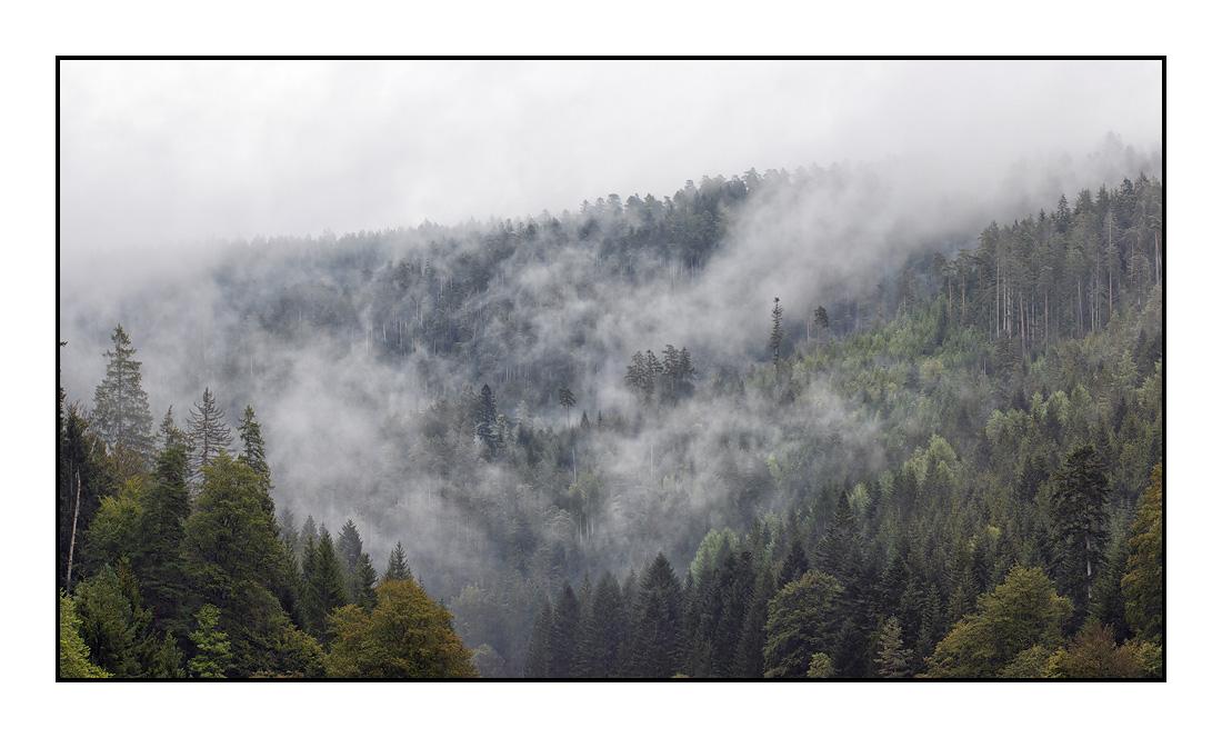 2020-08 Ferienhaus Enztalblick in Enzklösterle im Schwarzwald - Nebelstimmung im Enztal 01